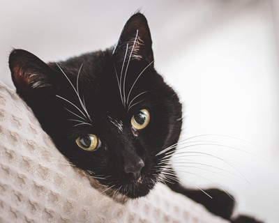 Meowlo