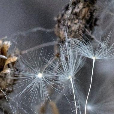 IMG_1334-3 Seeds
