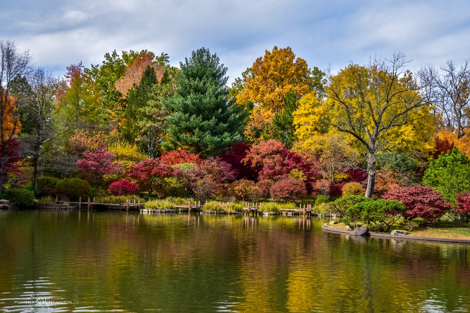 I took this photo at the Missouri Botanical Garden. The fall colors were all around the lake in t...