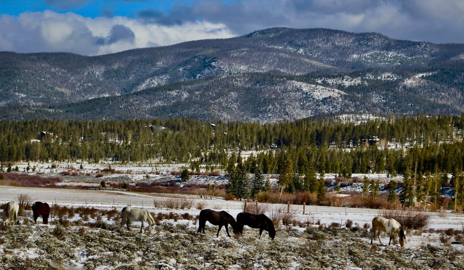 Horses that where saved from the East Troublesome fire in Grand County Colorado. 11/2020