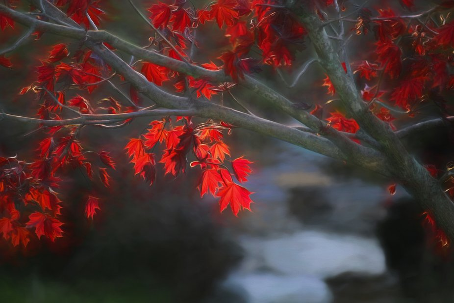 A photo from an Autumn past and processed with Topaz Impression - Georgia O'Keefe ll at ...