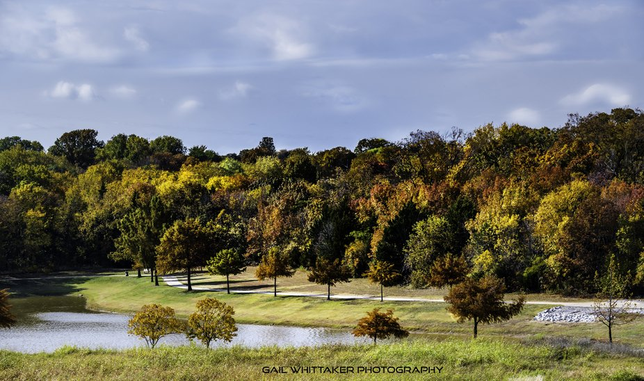 Located here near my house, it i so unusual to see this kind of autumnal color here in Texas!