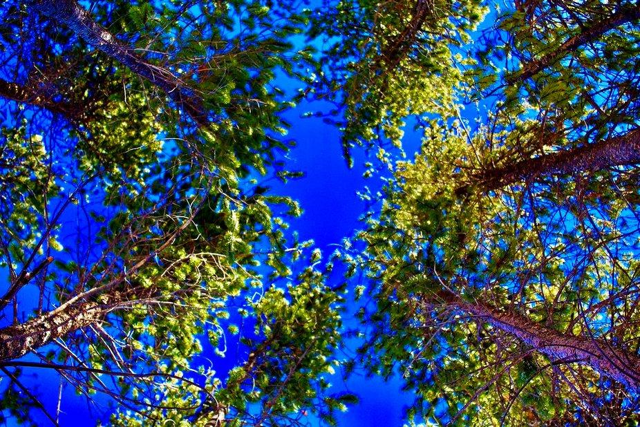 Trees copy