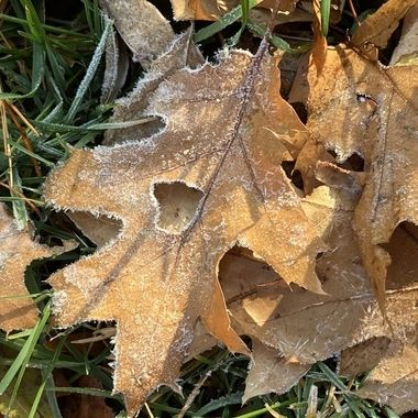 I love fall and frost. It was wonderful to wake up to the artistry of nature this morning.