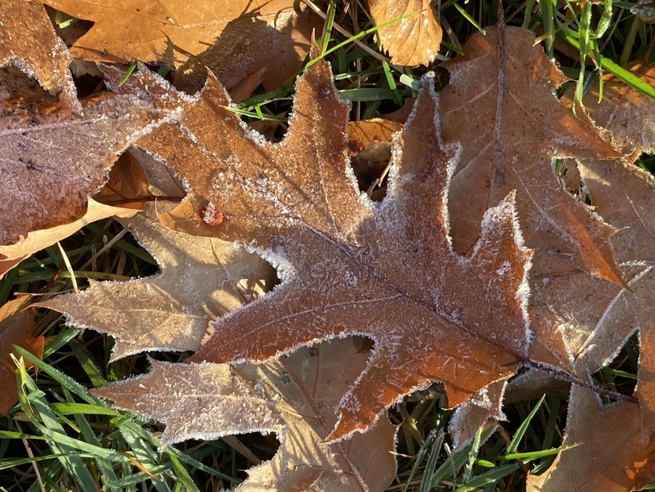 It was wonderful waking up to the beauty of frost on the leaves this morning.