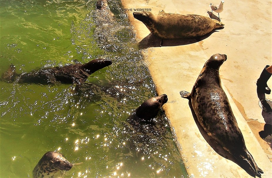 Seal Rescue & Sanctuary 2010.JPG