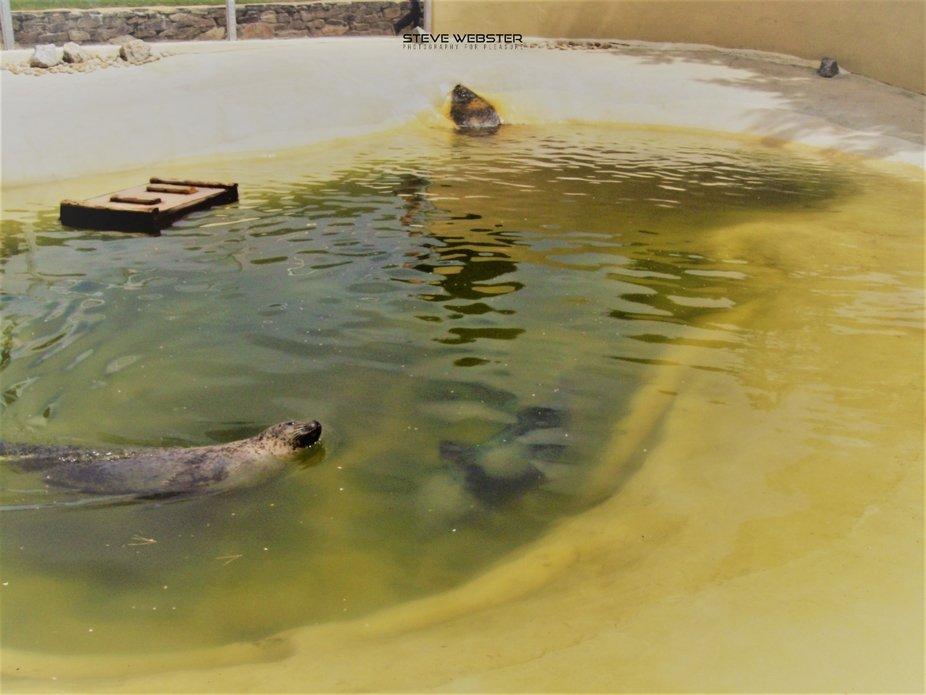 Seal Sanctuary 2010.JPG