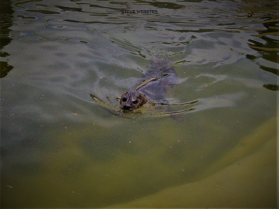 Seal Sanctuary Gweek.JPG