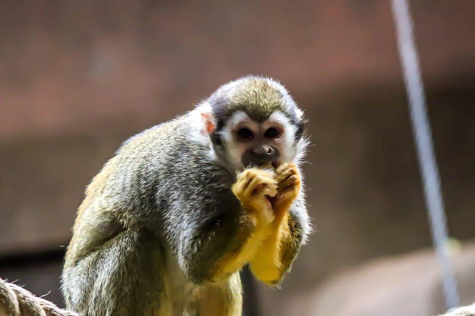???????? . . . . . #photography #photooftheday #photoshoot #photographer #camera #zoo #monkey #an...