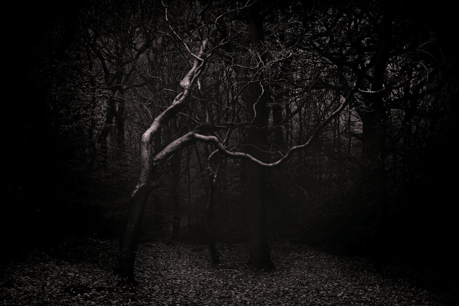 Light catching a lone silver birch tree in woodland at night