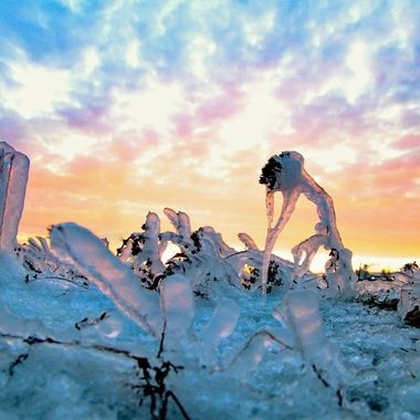 Frozen grass along Lake Superior at sunset