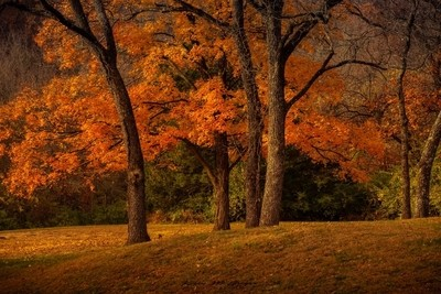 A Fall Morning