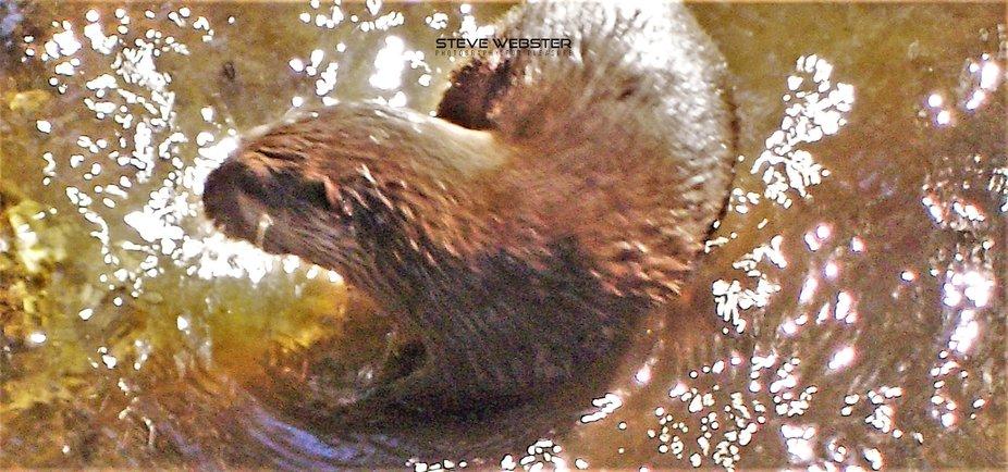 Cornwall 2011 Otter Man