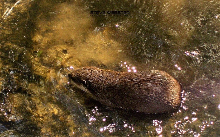 Cornwall 2011 Otter Way