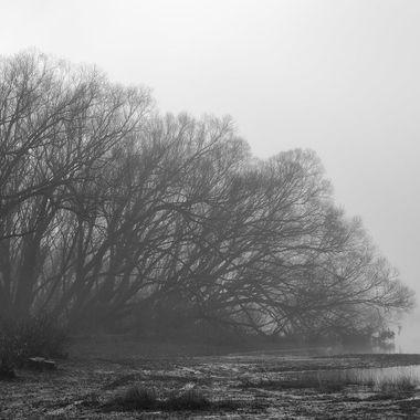 Pearson Mist