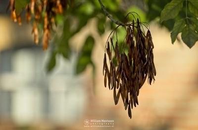 Autumn Tree Seeds