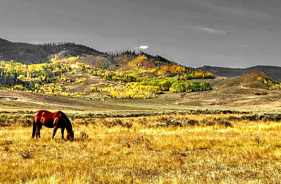 Horse near Granby Colorado in Autumn 2020 .