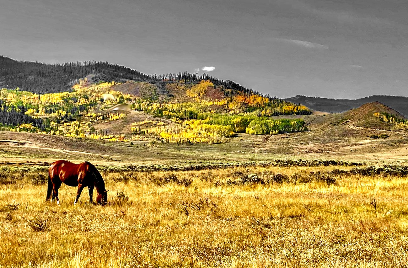 Horse near Granby Colorado in Autumn 2020 .