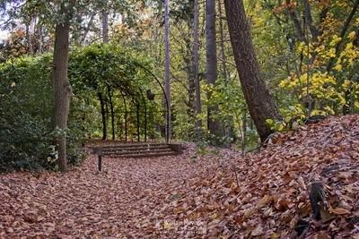 Autumn Annapark