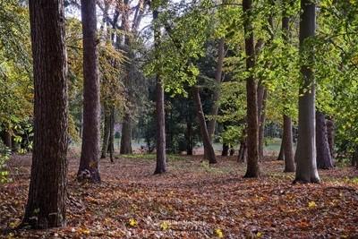 Autumn Forest Annapark