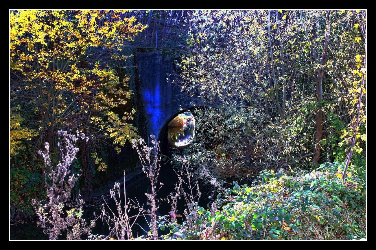 Autumn walk in Tienen Belgium 18/11/2020 The light was beautiful. Took advantage of taking this series of Autumn photos Theo-Herbots-Photography https://groetenuittienen.blog/ Autumn, Autumn colours