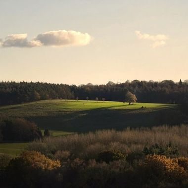 Sunlight catching a tree and field in a Capability Brown landscape