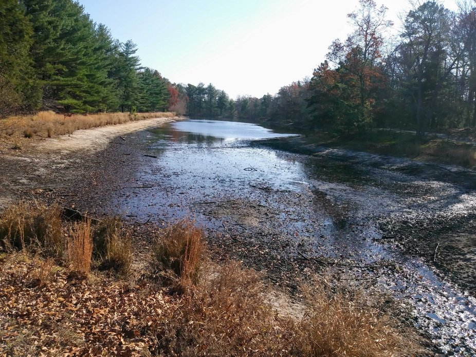 Ocean County Park     I was walking in the Park when it was Spring and I enjoy photography so whe...