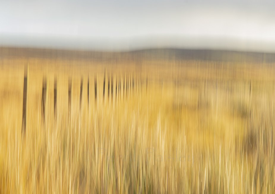First attempt at ICM.  This technique can create some interesting effects.  Not too sure about th...