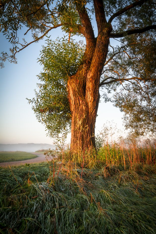 morning calm with tree
