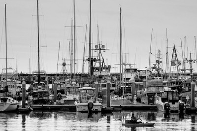 Life in the Harbor