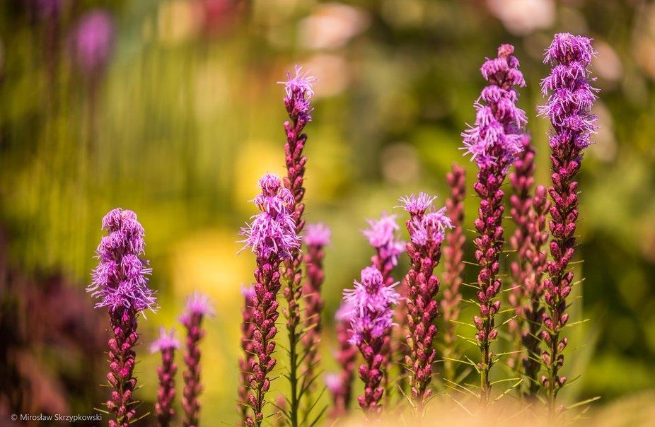 Kwiaty w pewnym ogrodzie