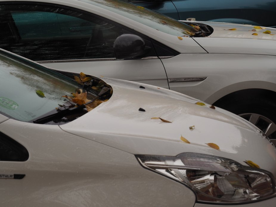 Fallen leaves stain the whites of cars