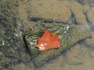 One leaf from above