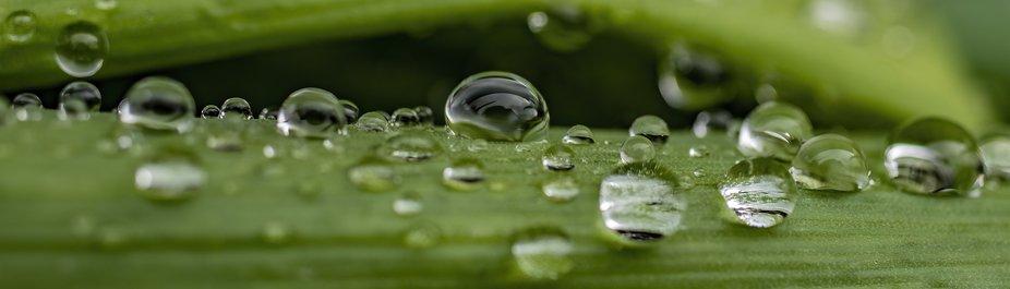 Raindrops2_IMG_2758