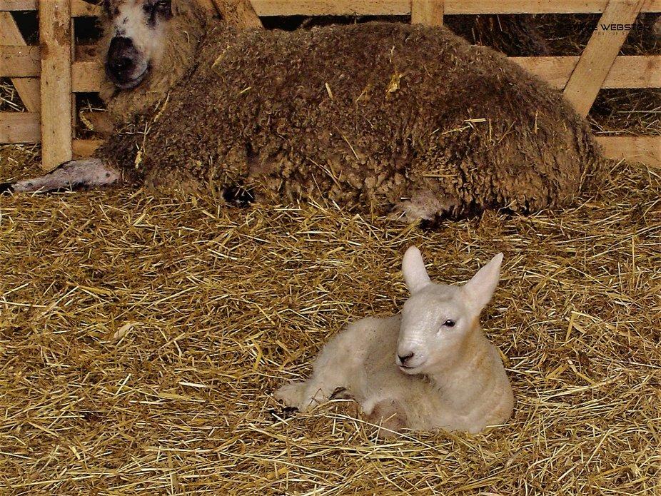 Beamish Hey Mum 2012.JPG