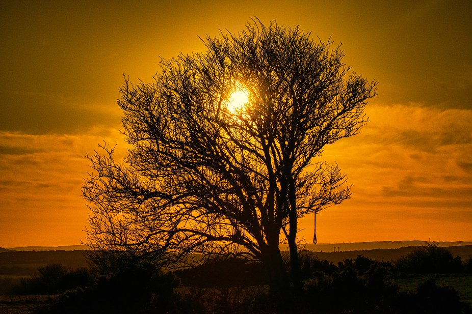 sunsetting behind a tree on Cleadon hill  UK