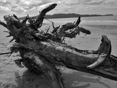 """""""Driftwood on Holiday's"""""""