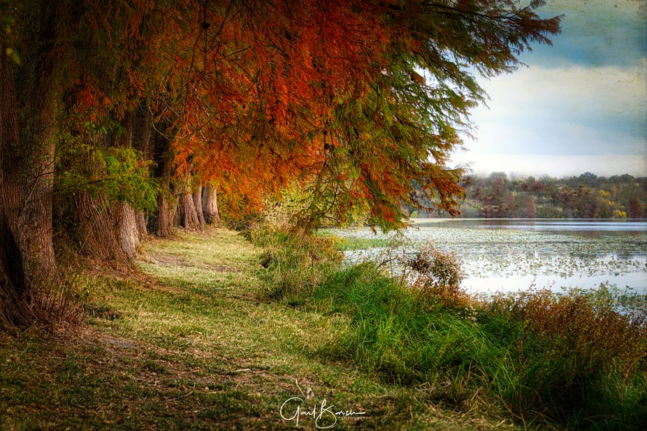 Cypress at Dusk