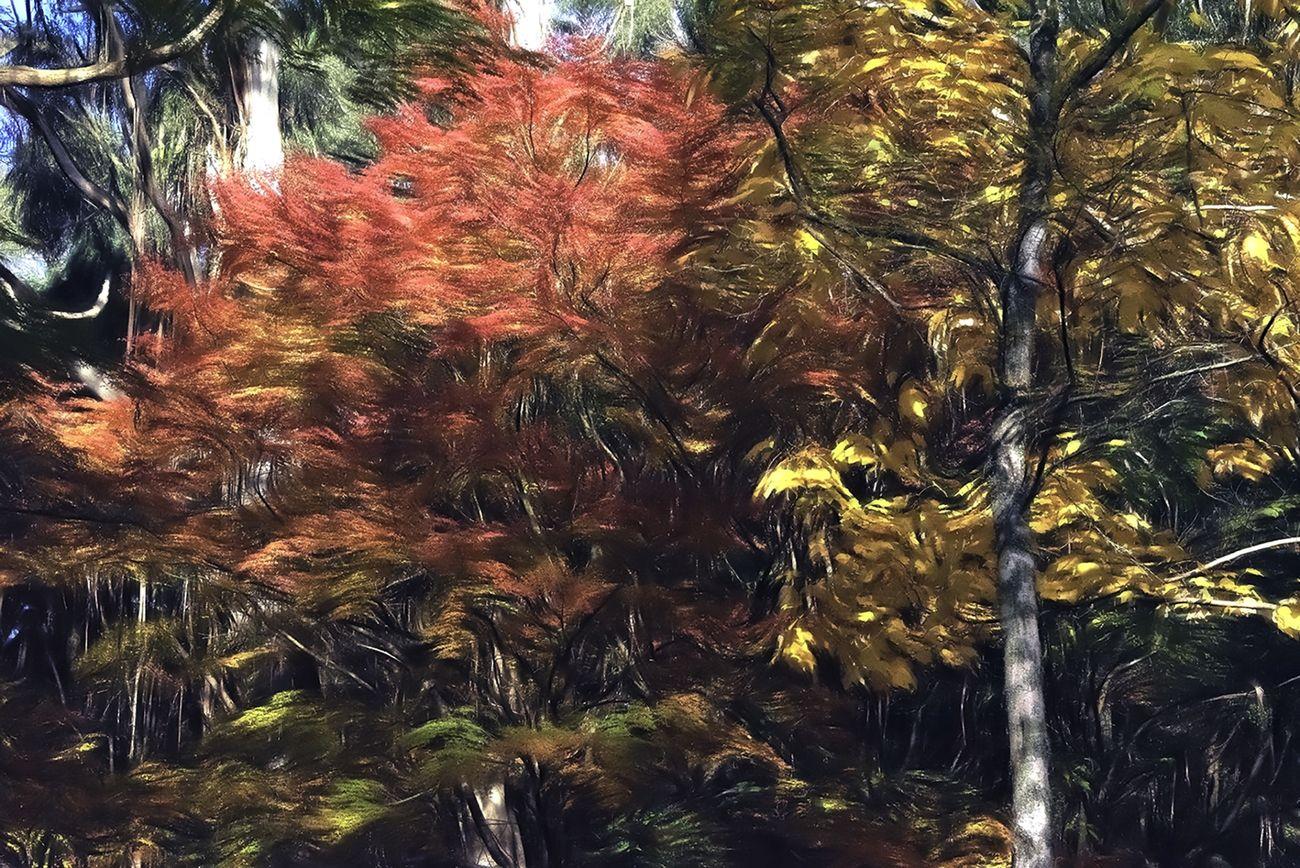 Digital Art - Flaming Trees