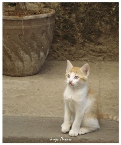 Kitty from Havana, Cuba.
