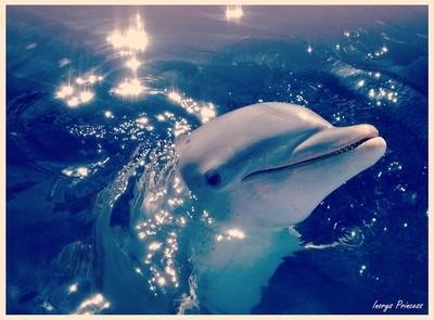 Dolphin from Cuba!