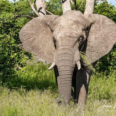 Elephant's Peaceful Breakfast