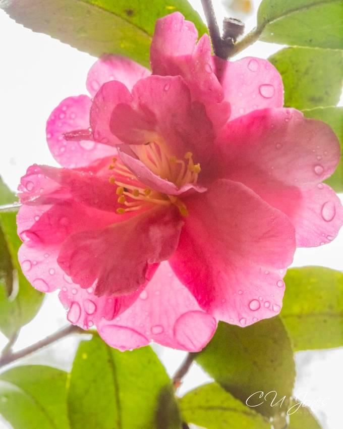 Magnolia Plantation- Nov  2020