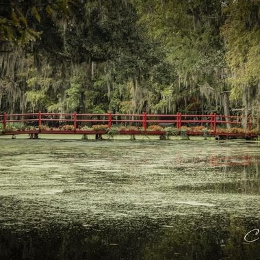 Magnolia Plantation- Nov  2020
