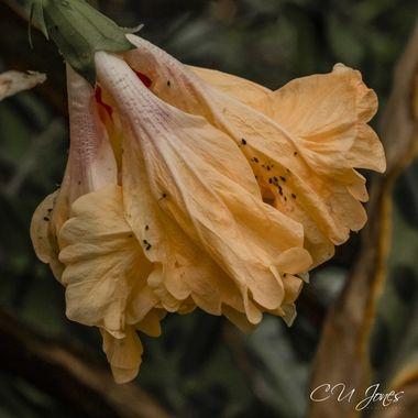Cypress Gardens- Nov 2020