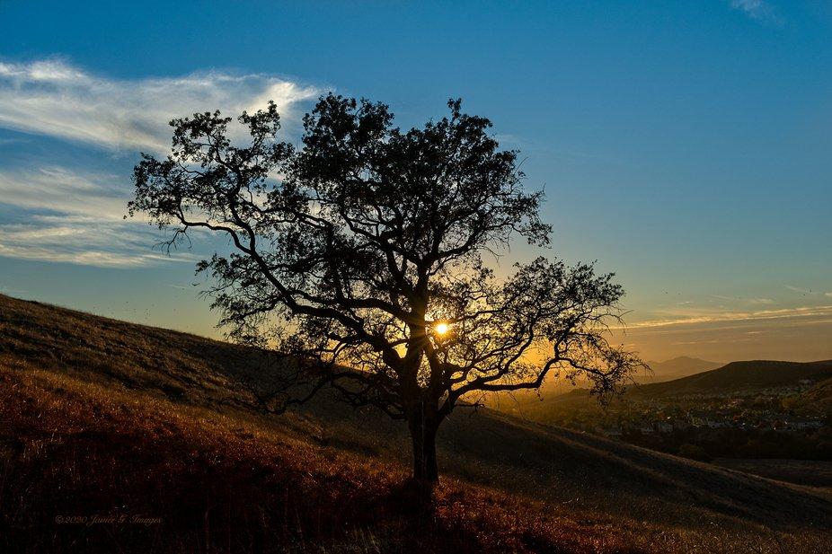 Long Canyon Trail Oak