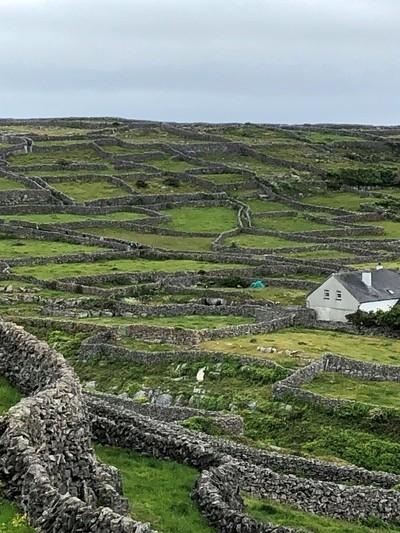 Countryside Landscape - Ireland