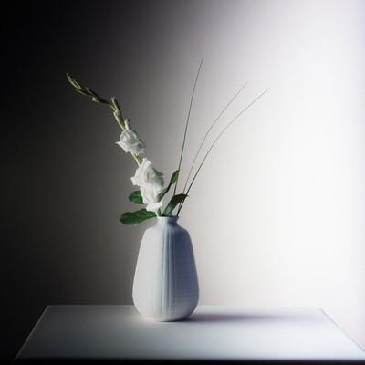 White Gladiolus - 120 Film