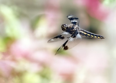 Dragon In Fly