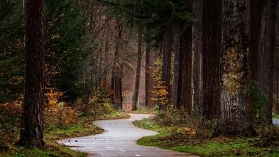 Cycling Lane